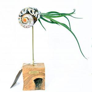 Escultura Tillandsia